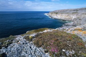 Burnt Cape Reserve